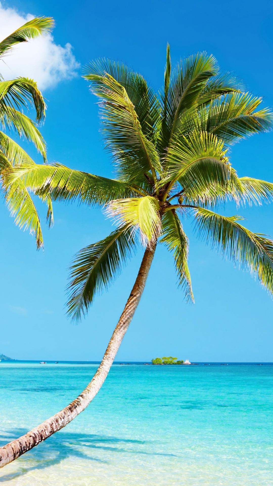 4k Wallpaper Beach Nature Beach Iphone 6 Plus Wallpaper - Buch Am Erlbach , HD Wallpaper & Backgrounds