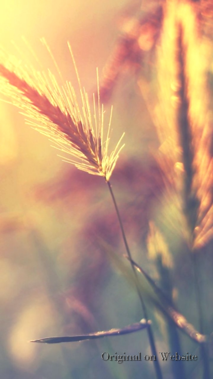 Iphone Wallpaper 4k Nature Farm Wheat Corp Macro Blur Imagem Para Slides Gospel 885872 Hd Wallpaper Backgrounds Download