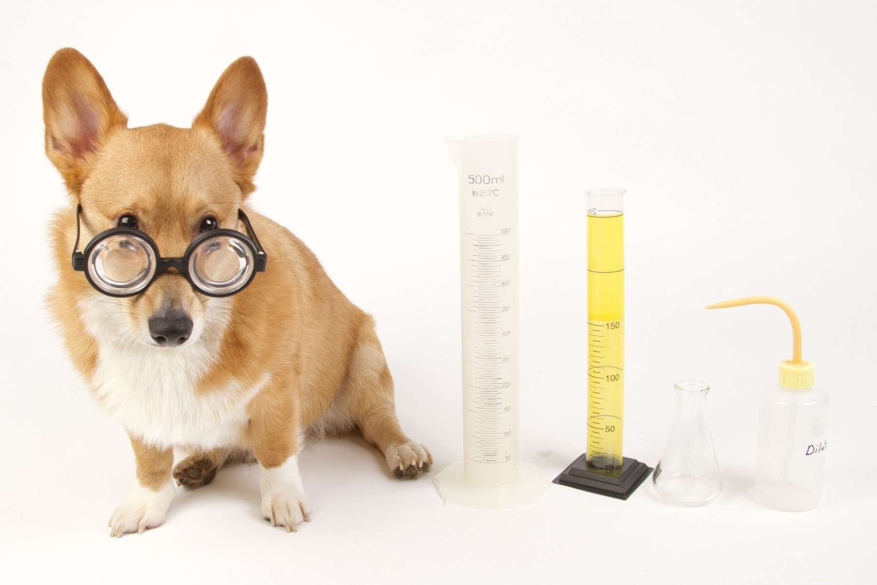 88 888563 glases glass dogs glasses dog animals 3d wallpapers