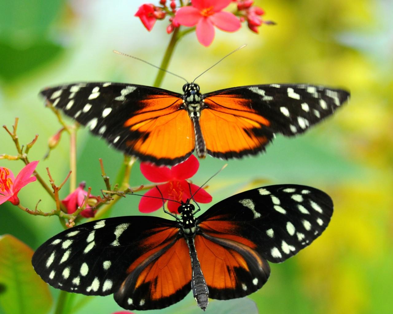 Cantiknya Kupu Kupu Di Antara Bunga Yang Indah Butterfly