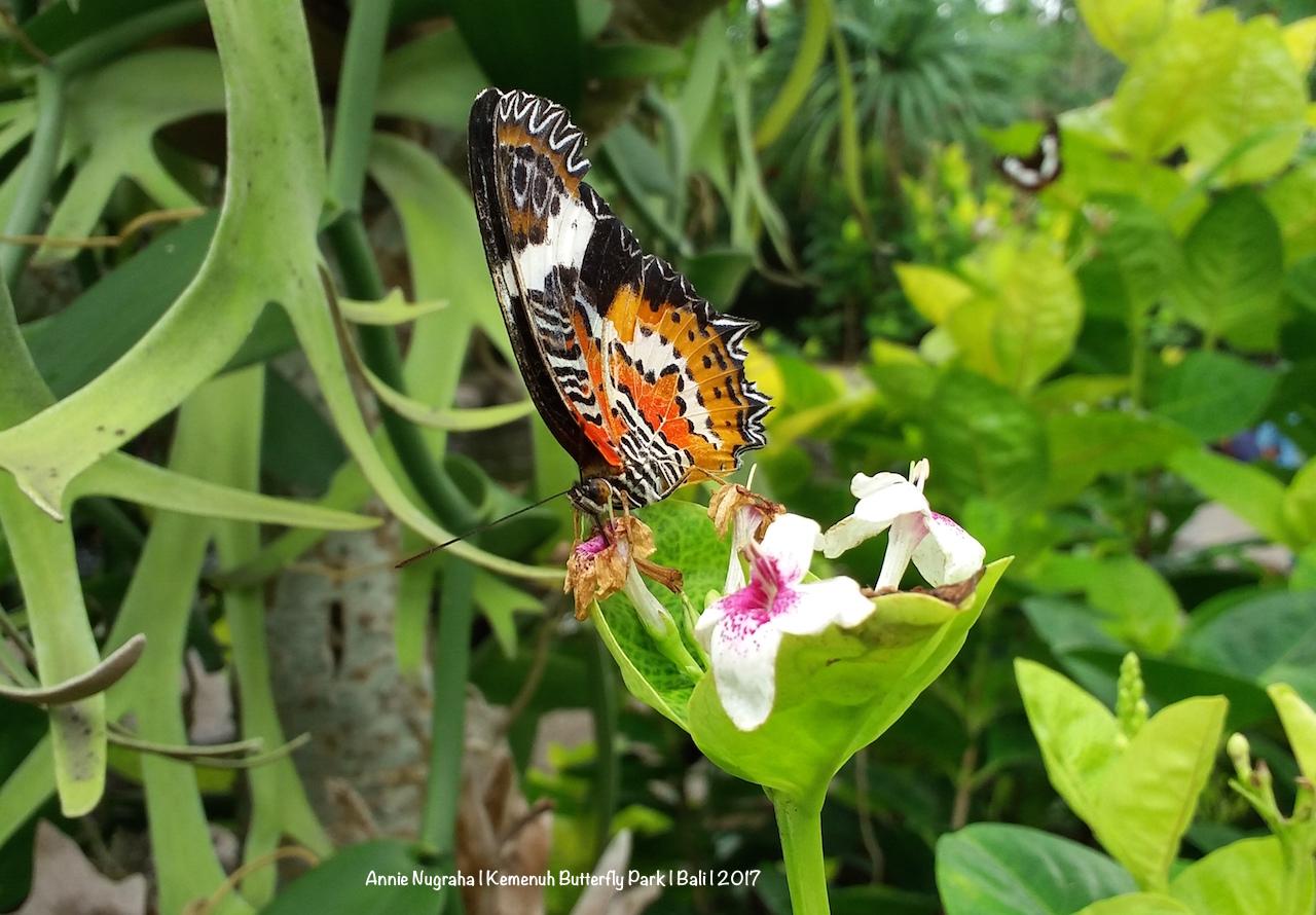 Ada Berbagai Spesies Kupu-kupu Di Sini, Tapi Hampir - Brush-footed Butterfly , HD Wallpaper & Backgrounds