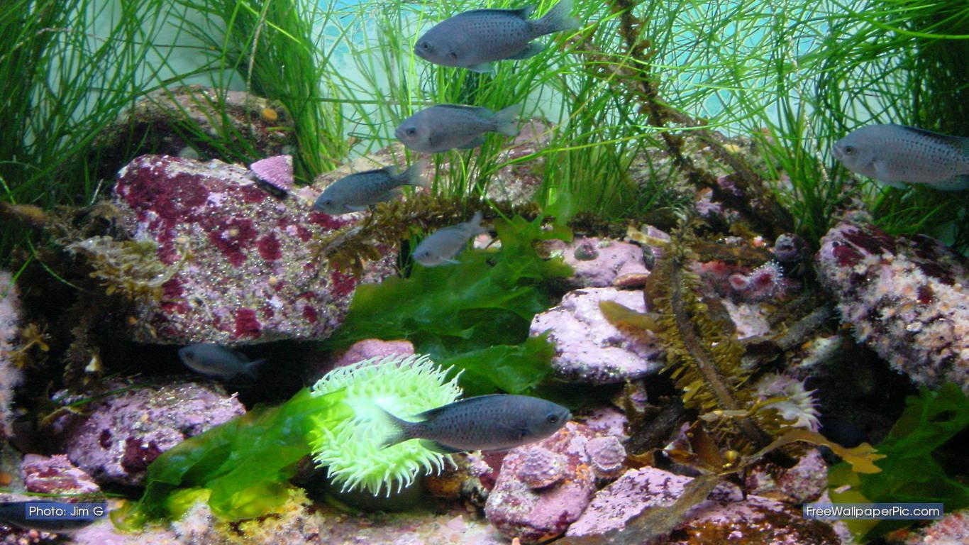 9 90072 3d aquarium live wallpaper hd hd aquarium