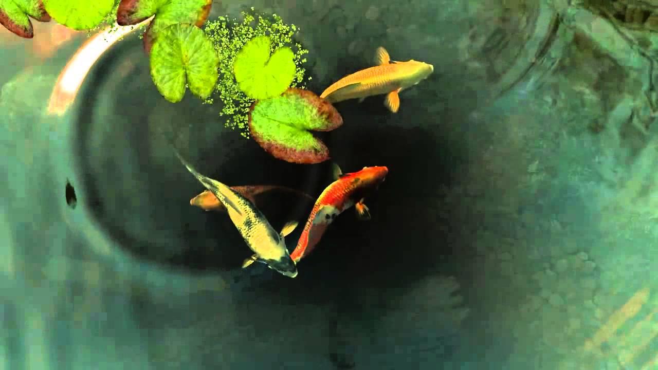 Koi Fish Live Wallpaper - Koi Fish , HD Wallpaper & Backgrounds