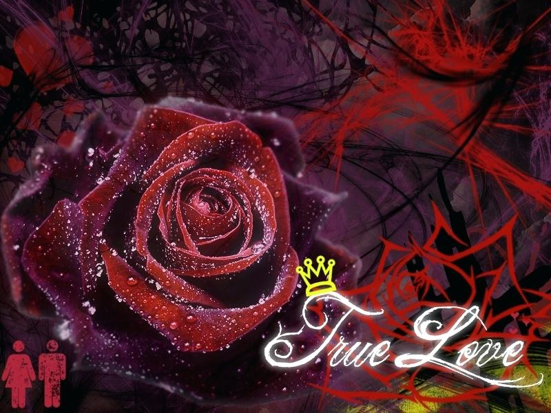 Nature Love Wallpaper Hd P Love Mobile Wallpaper P - Black Rose With Dew , HD Wallpaper & Backgrounds