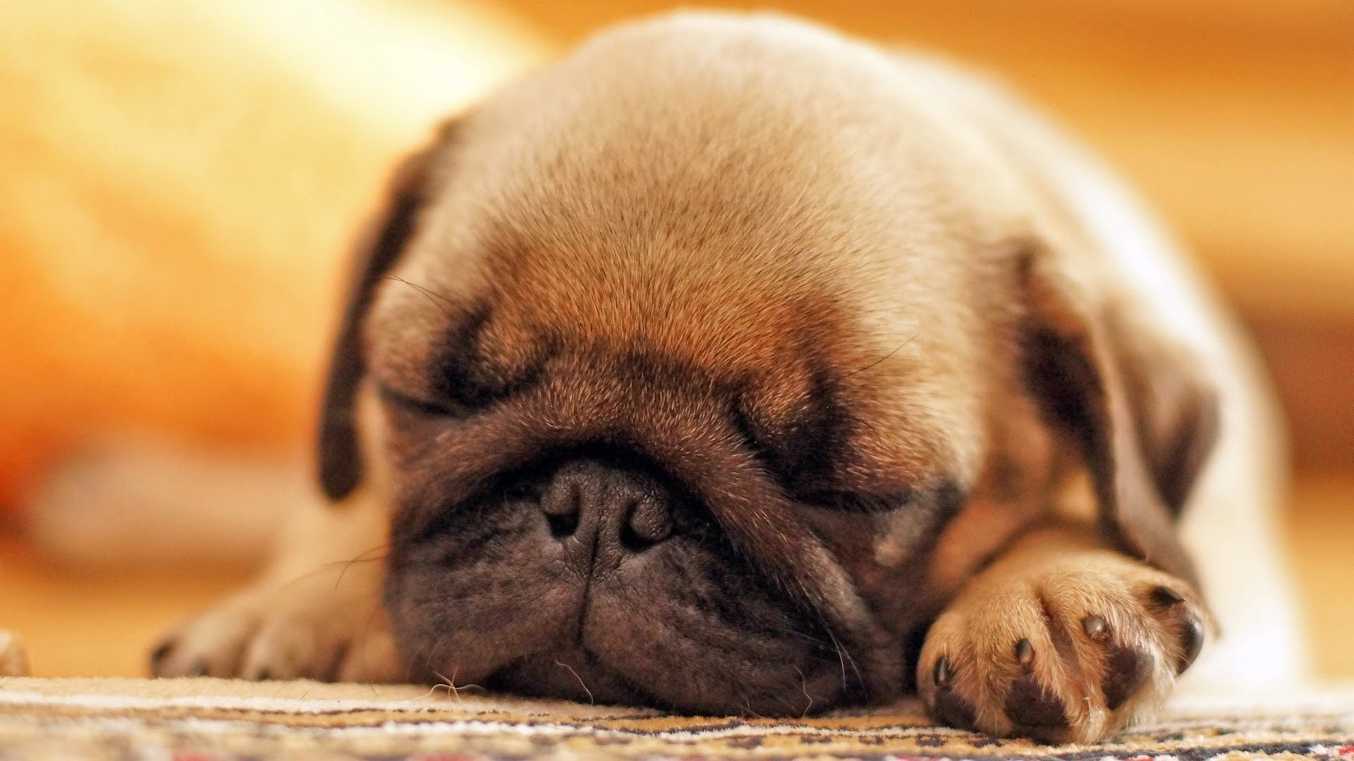 Black Pug Puppy Hd Wallpaper Cute Pug Puppies Sleeping 92329 Hd Wallpaper Backgrounds Download