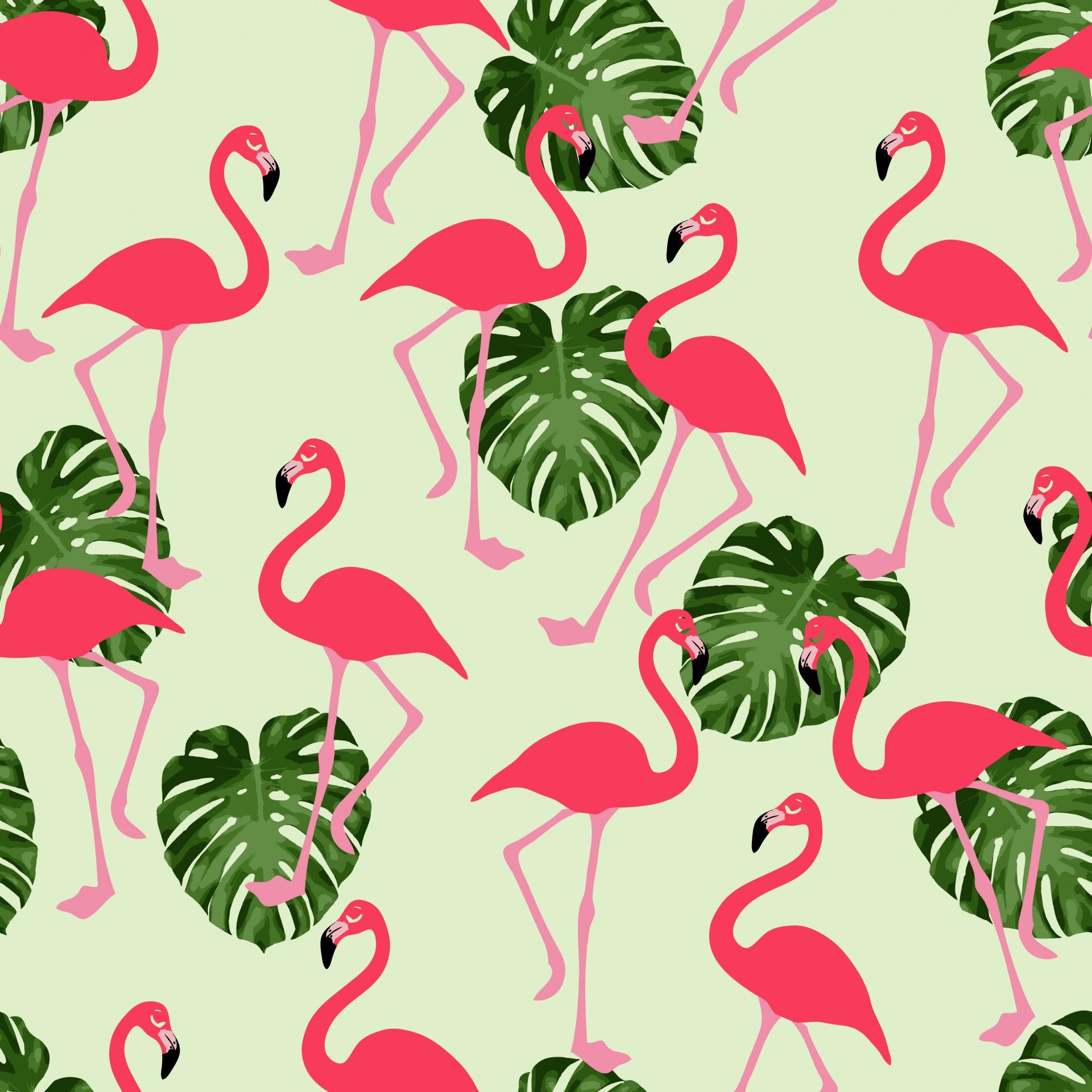 Flamingo Flamingoes Pink Flamingo Background 92872 Hd
