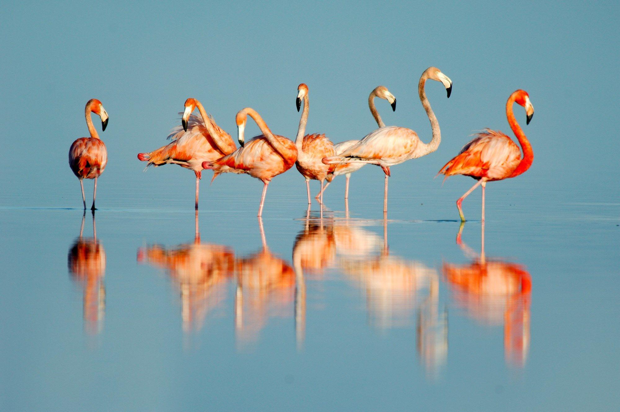 Flamingo Wallpaper Hd Flamingo Hd 93073 Hd Wallpaper