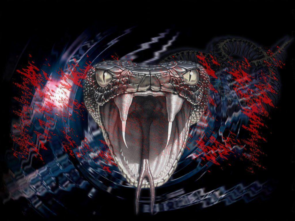 Black Snake Wallpapers Group Viper Snake 97927 Hd