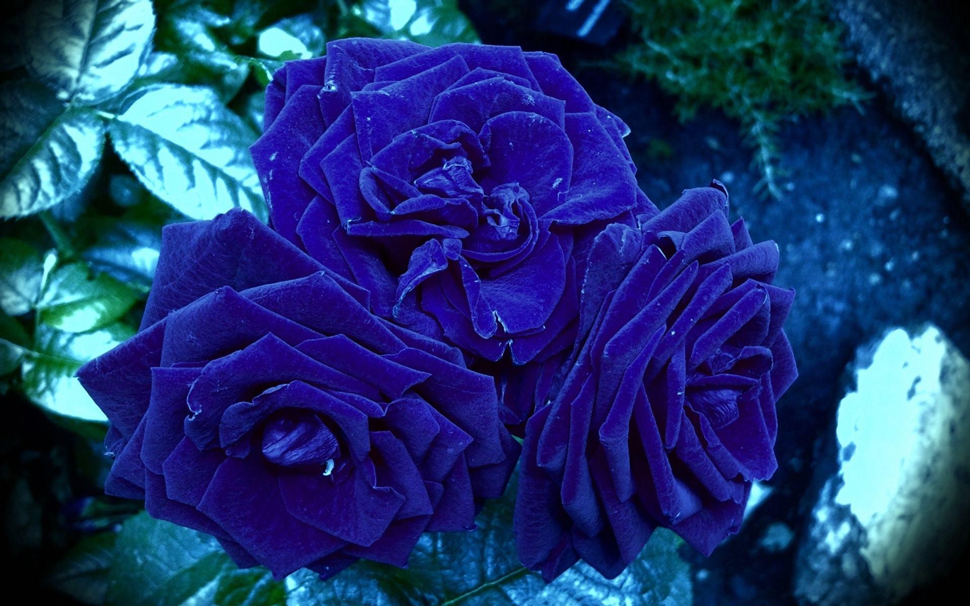 Blue - Beautiful Bokeh Of Flowers , HD Wallpaper & Backgrounds