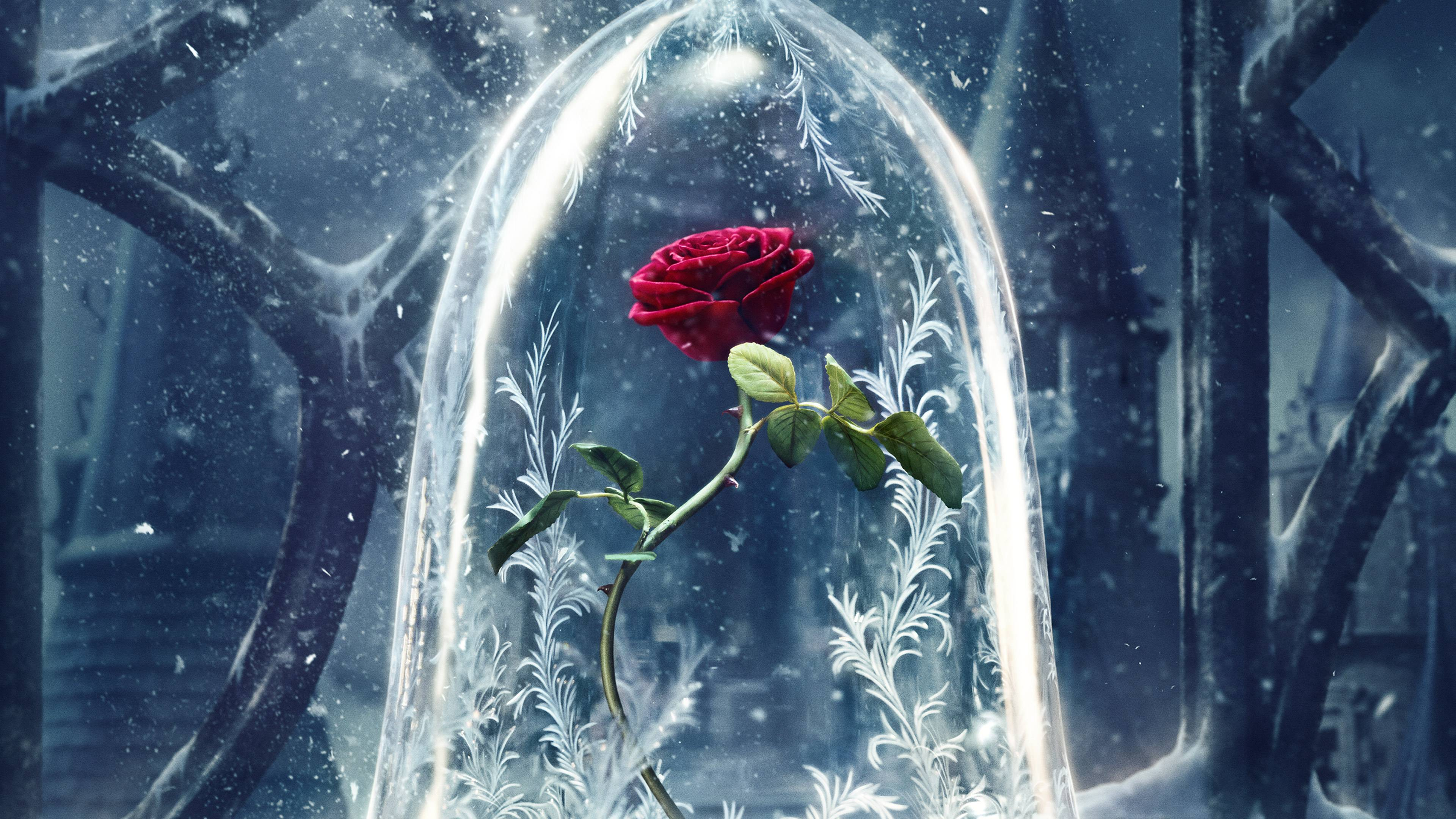 Beauty And The Beast Original 4k Rose From Beauty And The