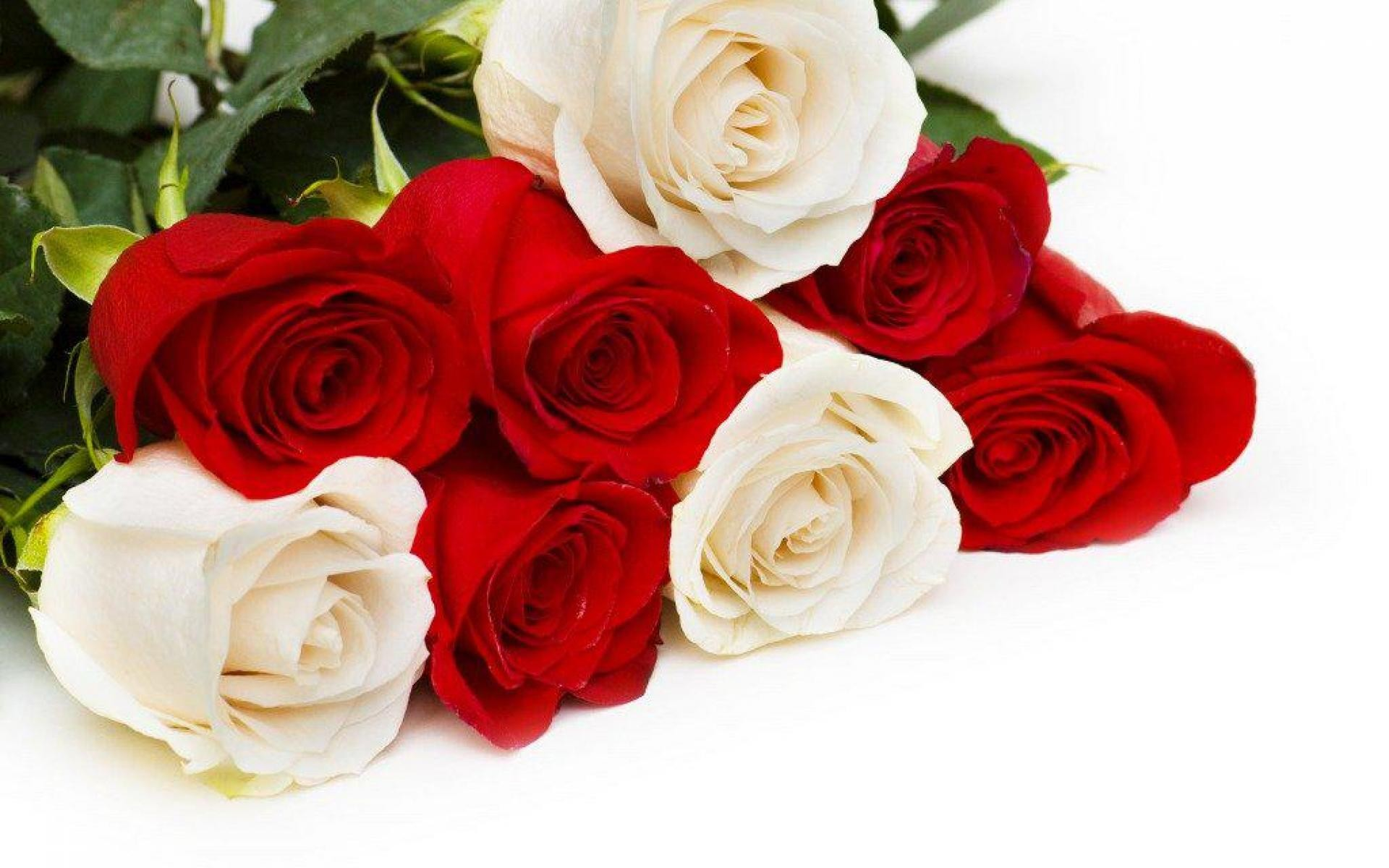 Beautiful Romantic Red Lovely Roses Gorgeous White - Beautiful Love Flowers Roses , HD Wallpaper & Backgrounds