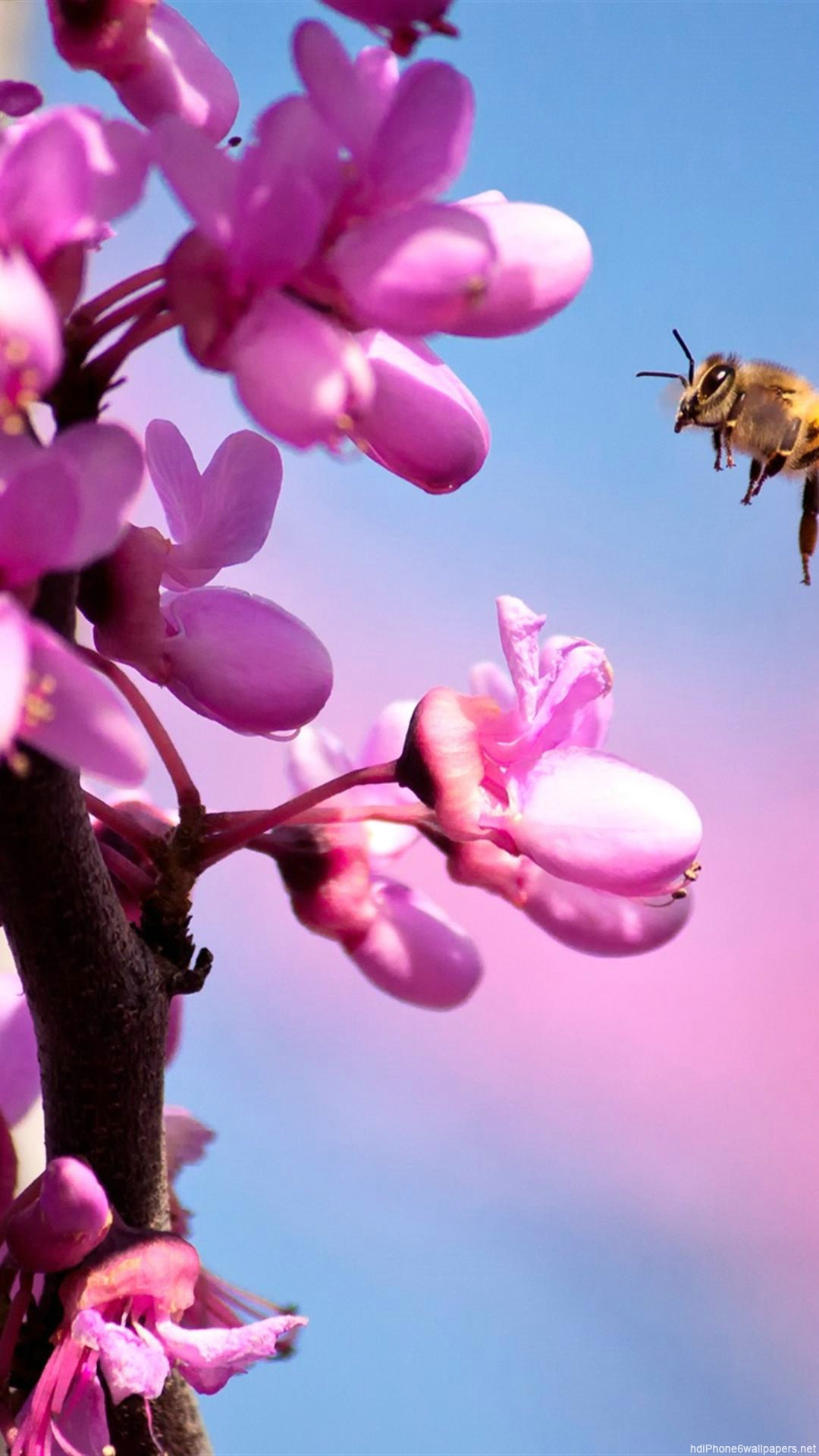 Start Download , Close Up Bee On Flower (905318) , HD