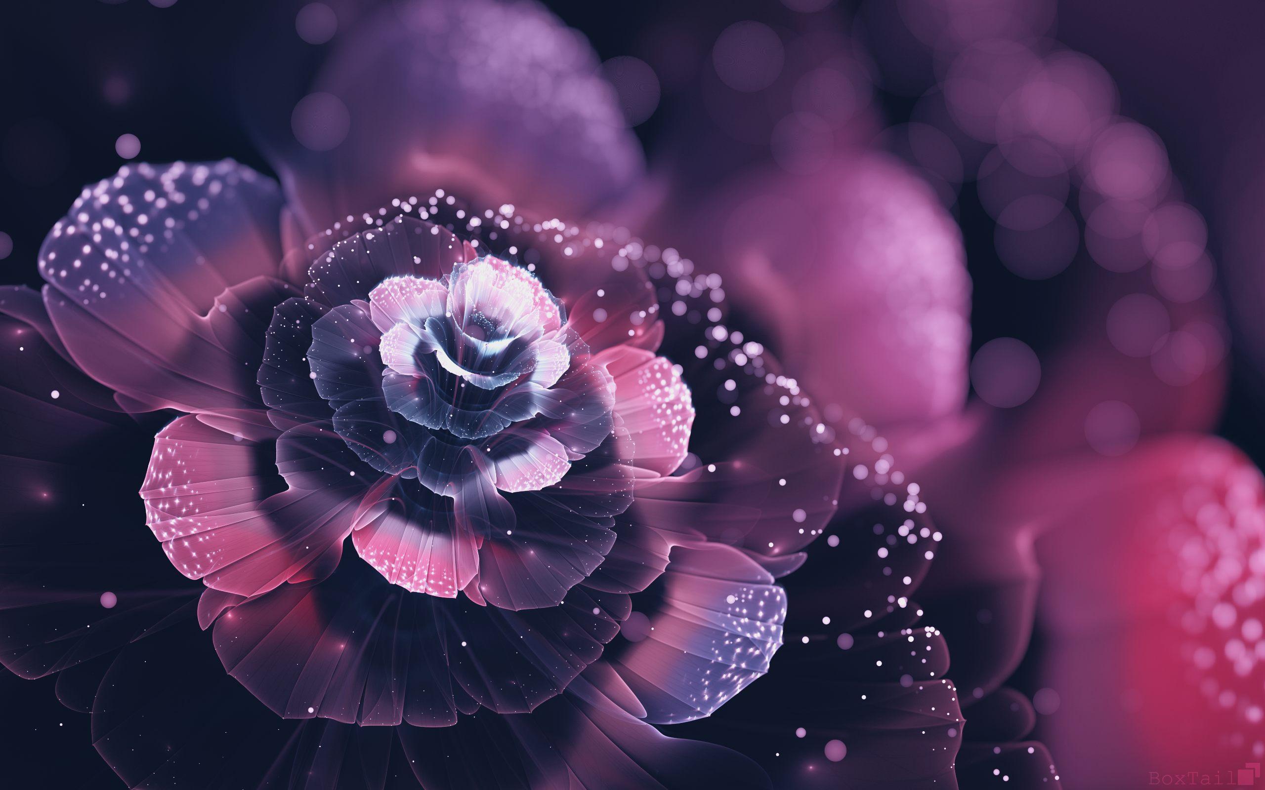 Fond D Ecran De Fleur Rouge , HD Wallpaper & Backgrounds