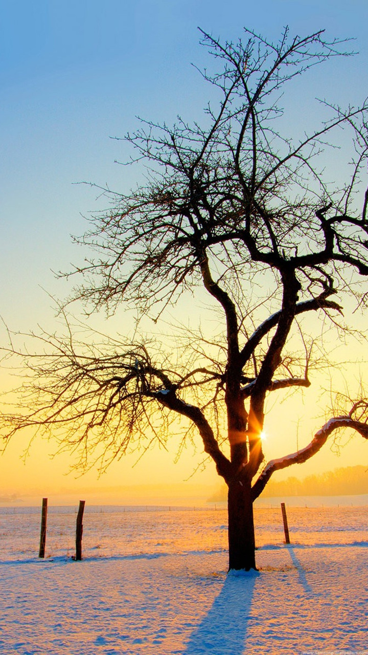 Nature And Tree Lock Screen Samsung Galaxy Note 2 Wallpaper Winter Sunrise Scenery 914757 Hd Wallpaper Backgrounds Download