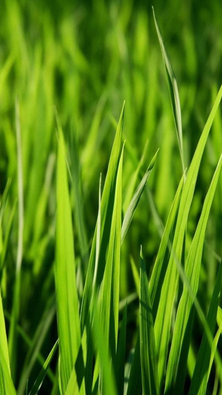 green grass full hd wallpaper green grass full hd 920410 hd wallpaper backgrounds download green grass full hd wallpaper green