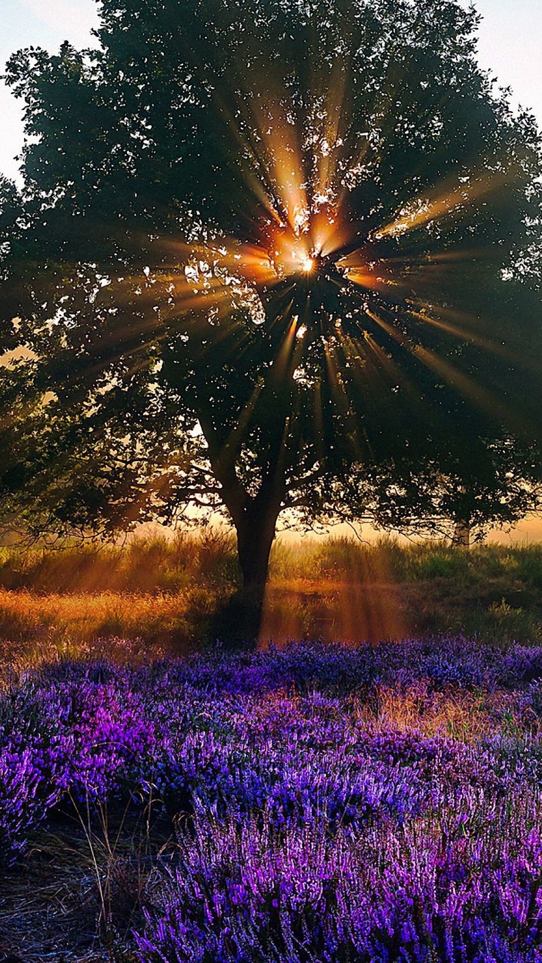 Nature Morning Sunshine Iphone 6 Wallpapers Hd , HD Wallpaper & Backgrounds