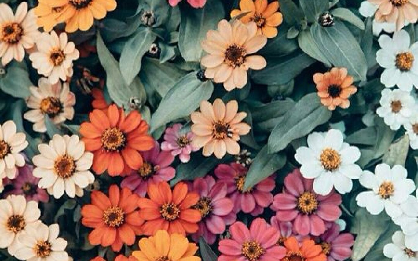 Flower Iphone Wallpaper Pinterest - Fake Flower , HD Wallpaper & Backgrounds