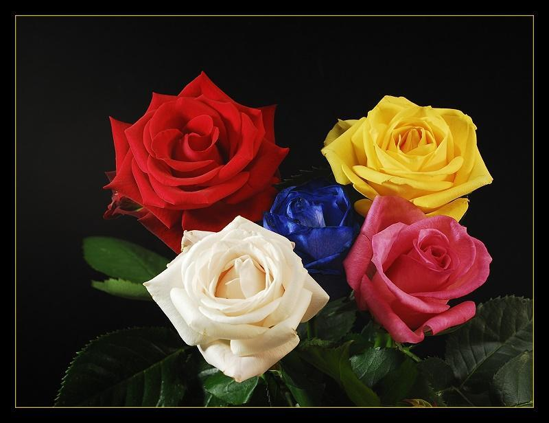 Animated Mobile Phone Wallpapers Flowers Roses In Ten - Different Colors Of Roses , HD Wallpaper & Backgrounds