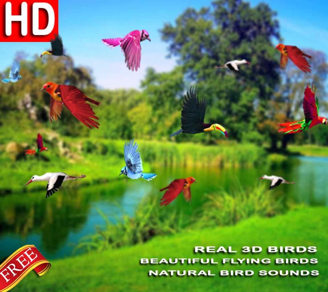 Beautiful Live Wallpaper Of Birds 927685 Hd Wallpaper