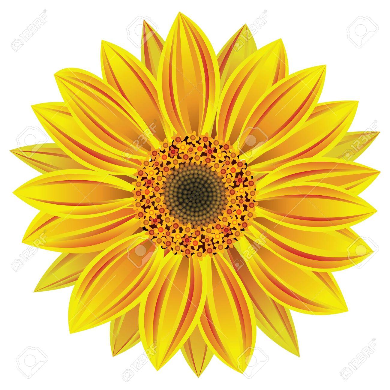 Wallpapermisc Single Sunflower Hd Wallpapers Free Top Single