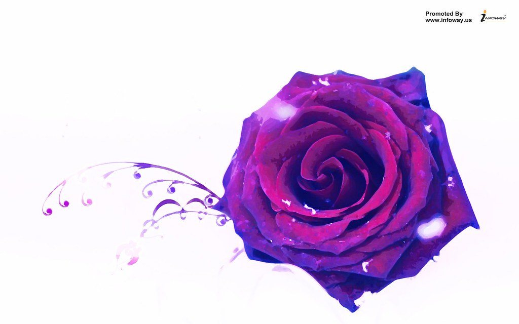 Beautiful Rose Purple Single Hd Wallpaper - Happy Purple Rose Day , HD Wallpaper & Backgrounds