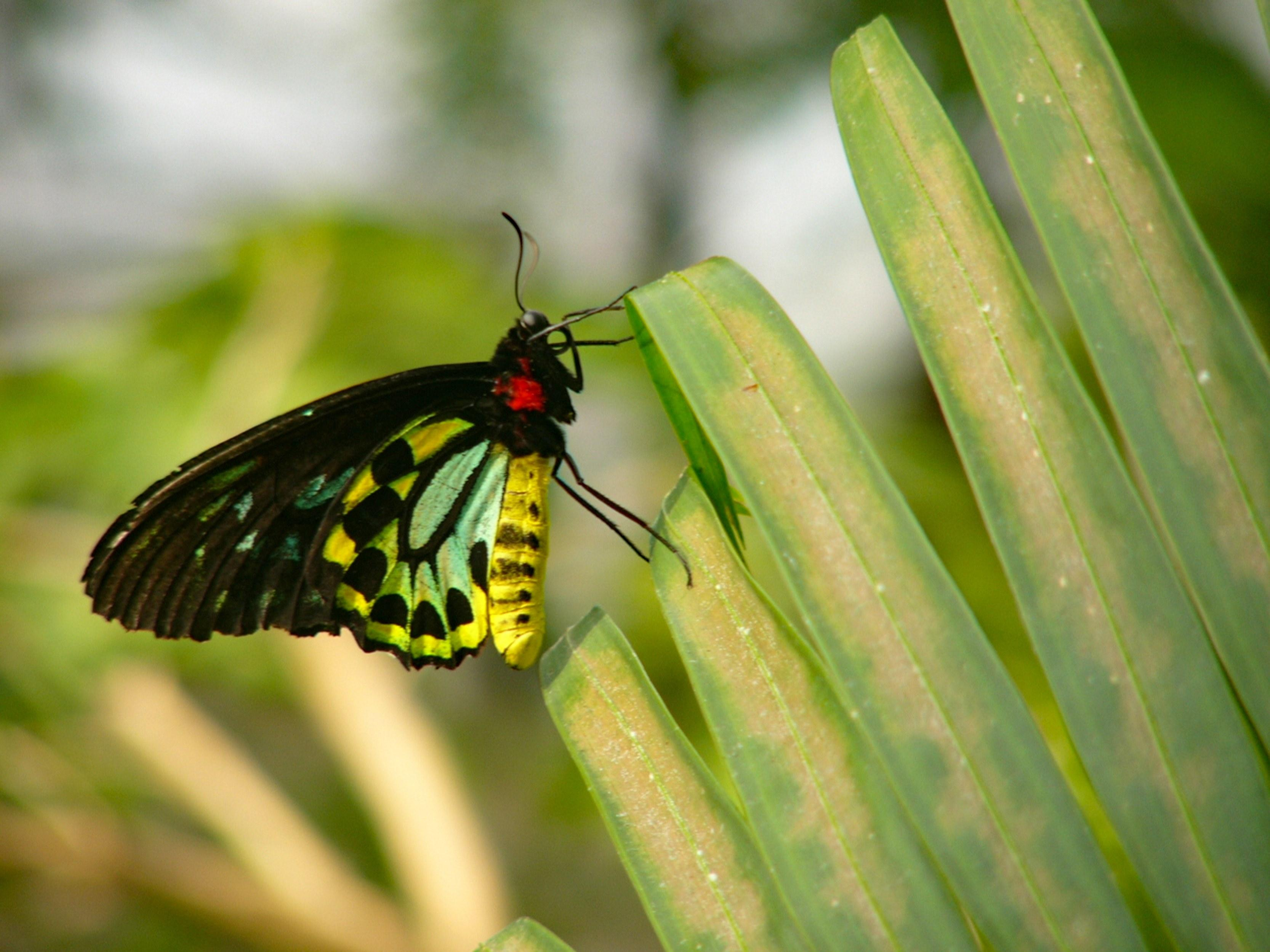 Conservatory Wallpaper - Brush-footed Butterfly , HD Wallpaper & Backgrounds