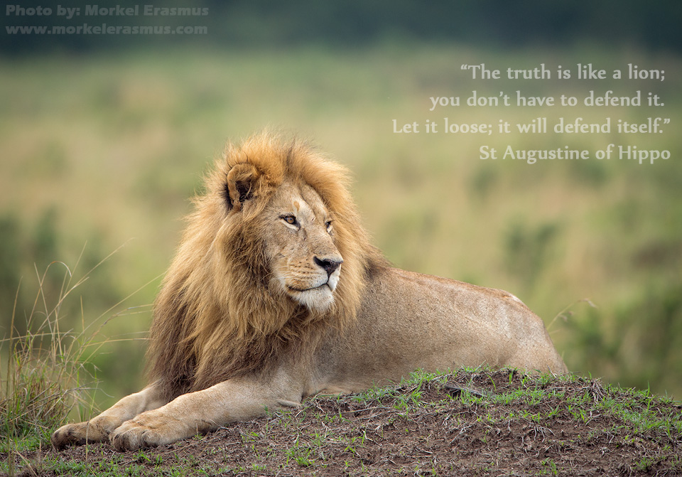 E Truth Is Ave To Defend It - Desktop Wallpaper Hd Lion With Quotes , HD Wallpaper & Backgrounds