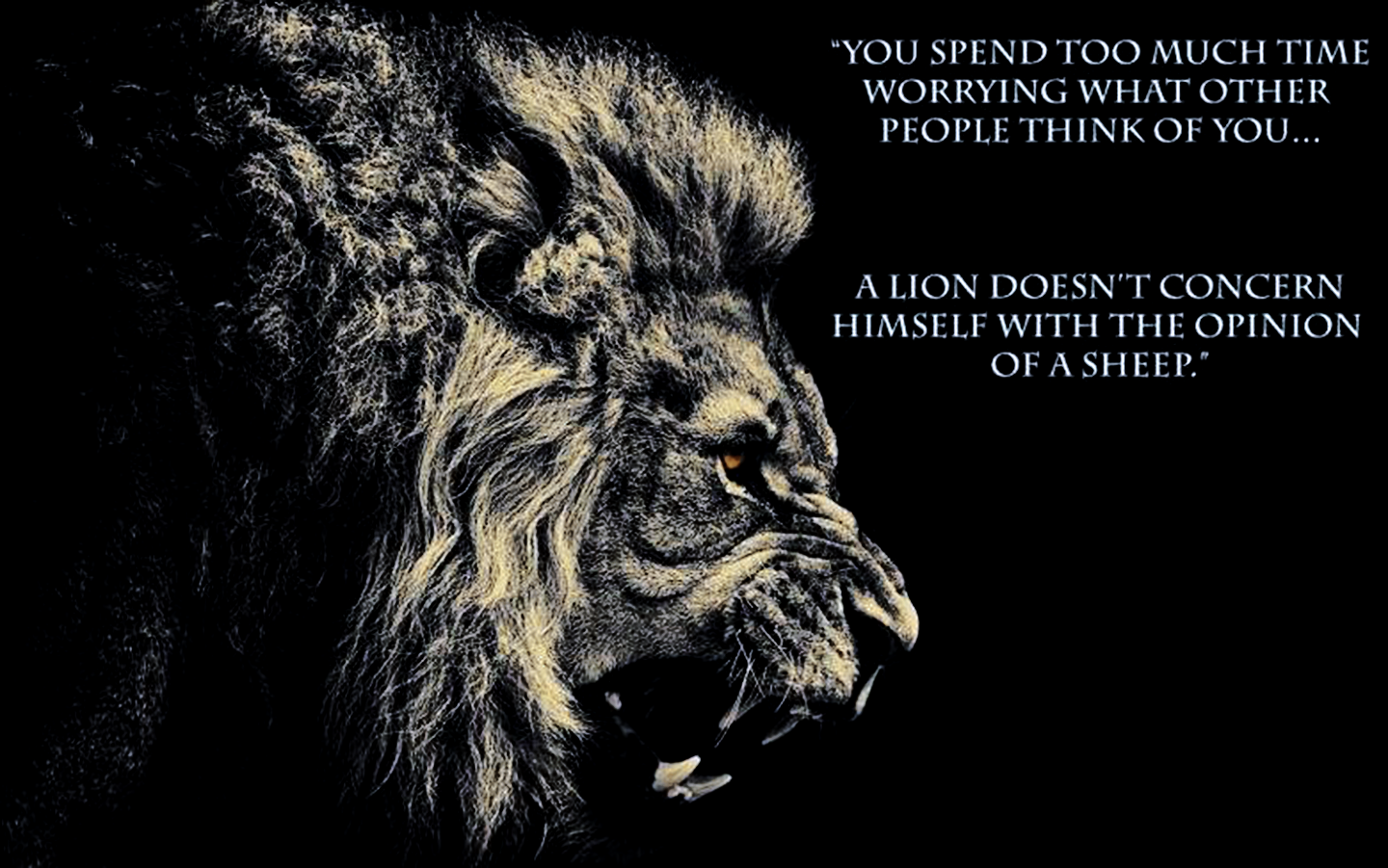 Lion Quotes And Sayings Google Search Best Deal Online - Lions Wallpaper With Quotes , HD Wallpaper & Backgrounds