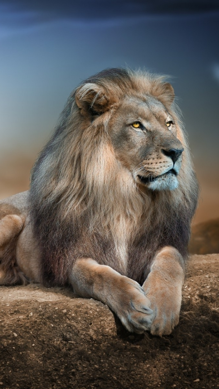 Animal / Lion Mobile Wallpaper - Animal Background For Phone , HD Wallpaper & Backgrounds