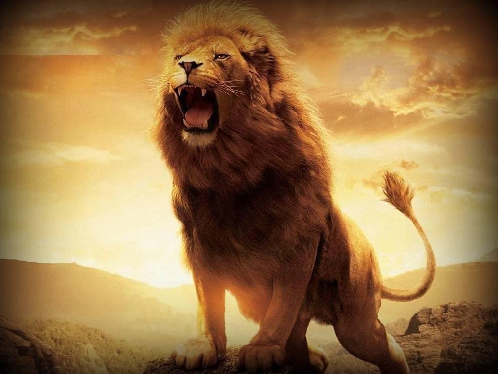 Cool Lion Hd Wallpapers For Desktop - Hd Wallpaper 1080p Lion , HD Wallpaper & Backgrounds
