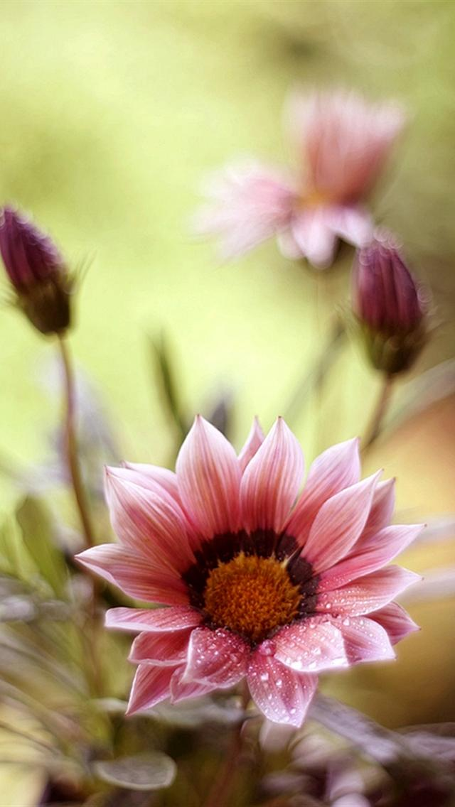 Iphone Wallpaper Tumblr Cute Pretty Girly Wallpapers - Iphone Beautiful Flowers , HD Wallpaper & Backgrounds