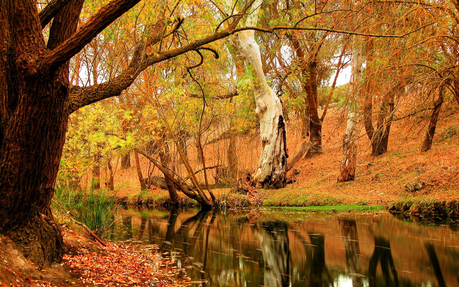 Fall Hd Wallpaper Beautiful Pictures Of Nature Autumn