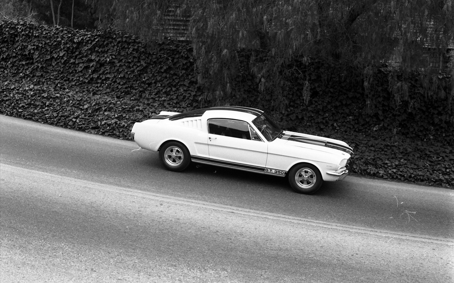 Ford Shelby Gt350 Mustang First Generation Ford Mustang