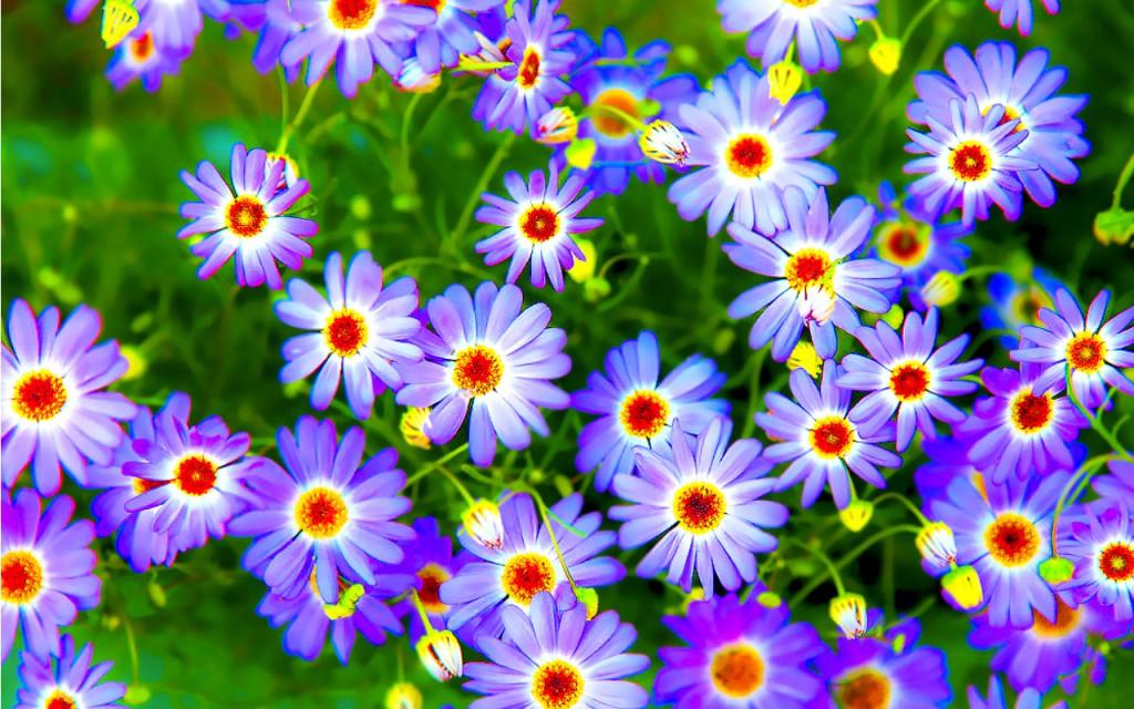 3d Hd Wallpapers Flowers 969916 Hd Wallpaper