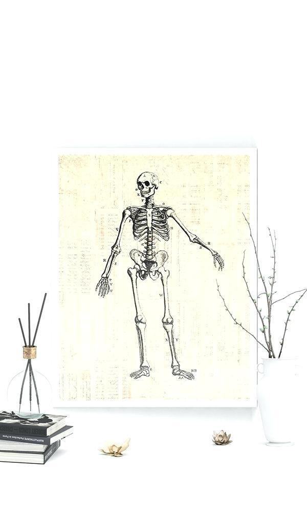 Anatomy Of A Wall Antique Skeleton Diagram Print Medical - Zodiac Sign Minimalist Sagittarius , HD Wallpaper & Backgrounds