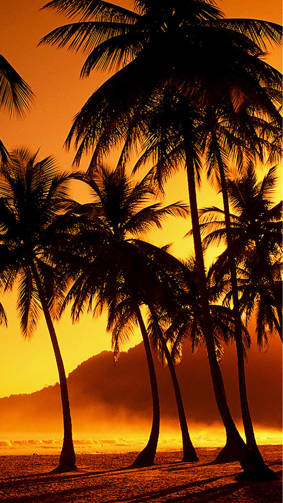 Nature Sunset Beach Coconut Grove Iphone 8 Wallpaper Sunset With Coconut Trees 977768 Hd Wallpaper Backgrounds Download