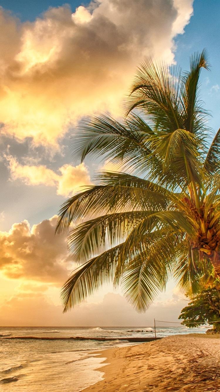 Fundo Summer , HD Wallpaper & Backgrounds