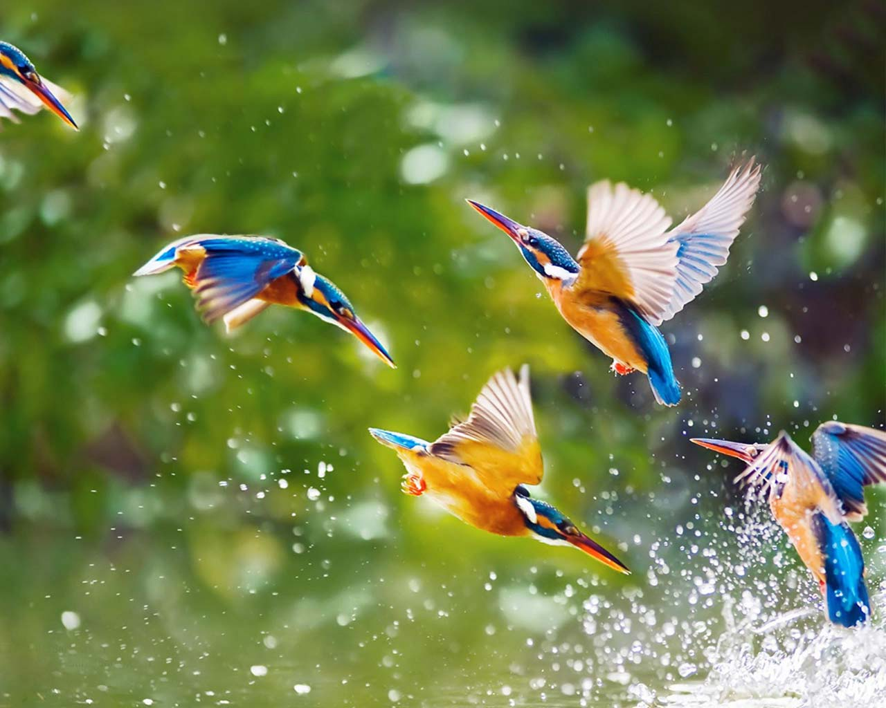 Flying King Fishers In Group Image - Colourful Birds Flying In The Sky , HD Wallpaper & Backgrounds
