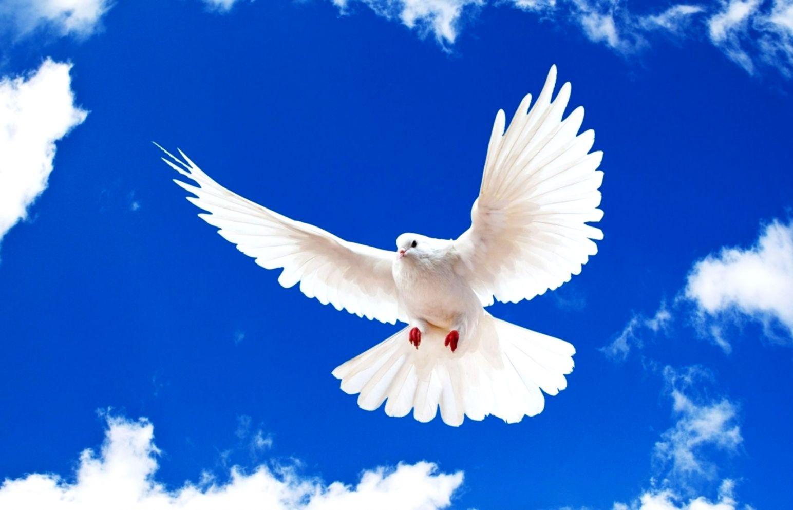 Blue Sky White Dove Flying New Desktop Wallpaper In - White Bird Flying In The Sky , HD Wallpaper & Backgrounds