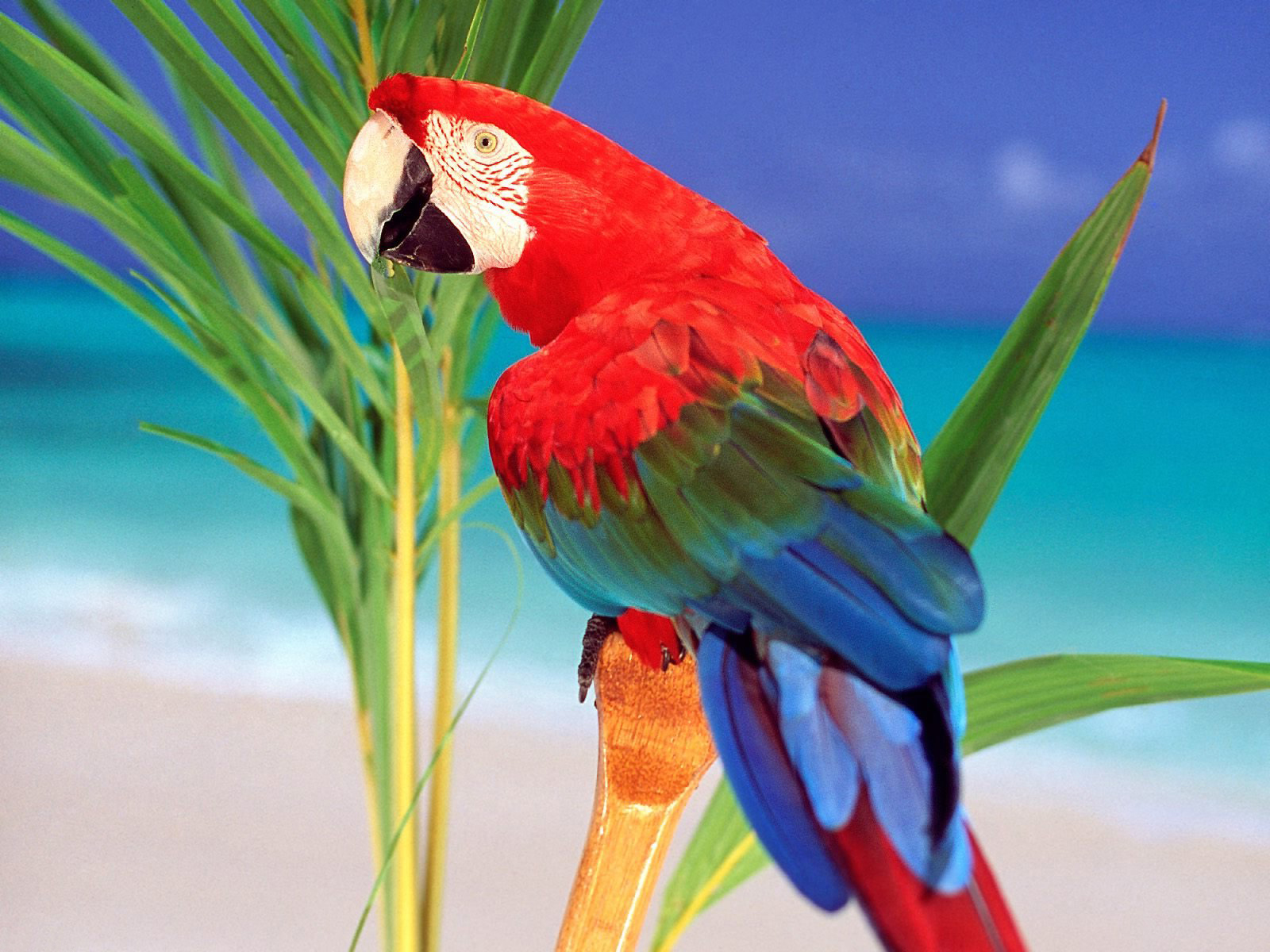 Parrot Image Hd Download , HD Wallpaper & Backgrounds
