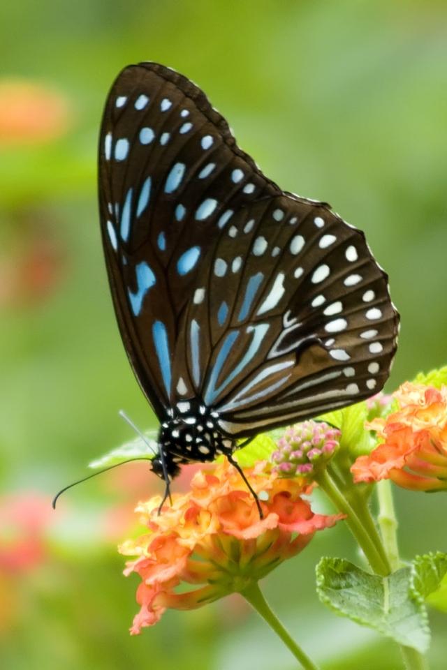 Butterfly Wallpaper Mobile Wallpapers - Mariposa , HD Wallpaper & Backgrounds