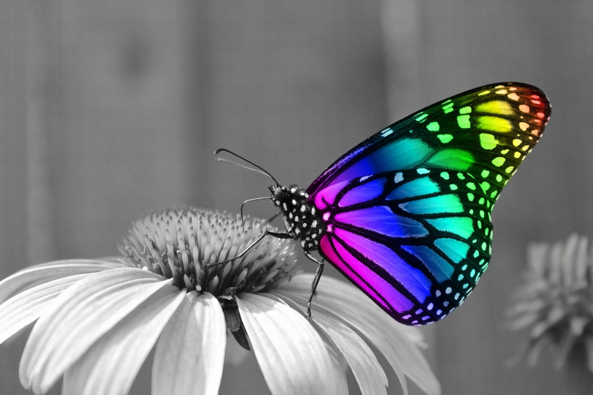 Butterfly Wallpaper Hd Ch004a - Butterfly Insects , HD Wallpaper & Backgrounds