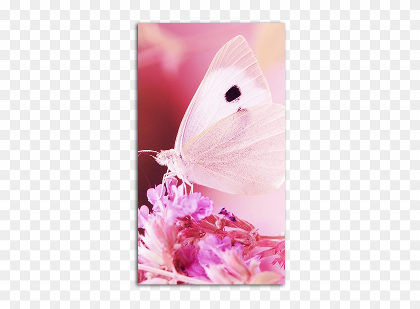 Gallery Of Pink Butterfly Wallpaper Mobile , Pink Butterfly