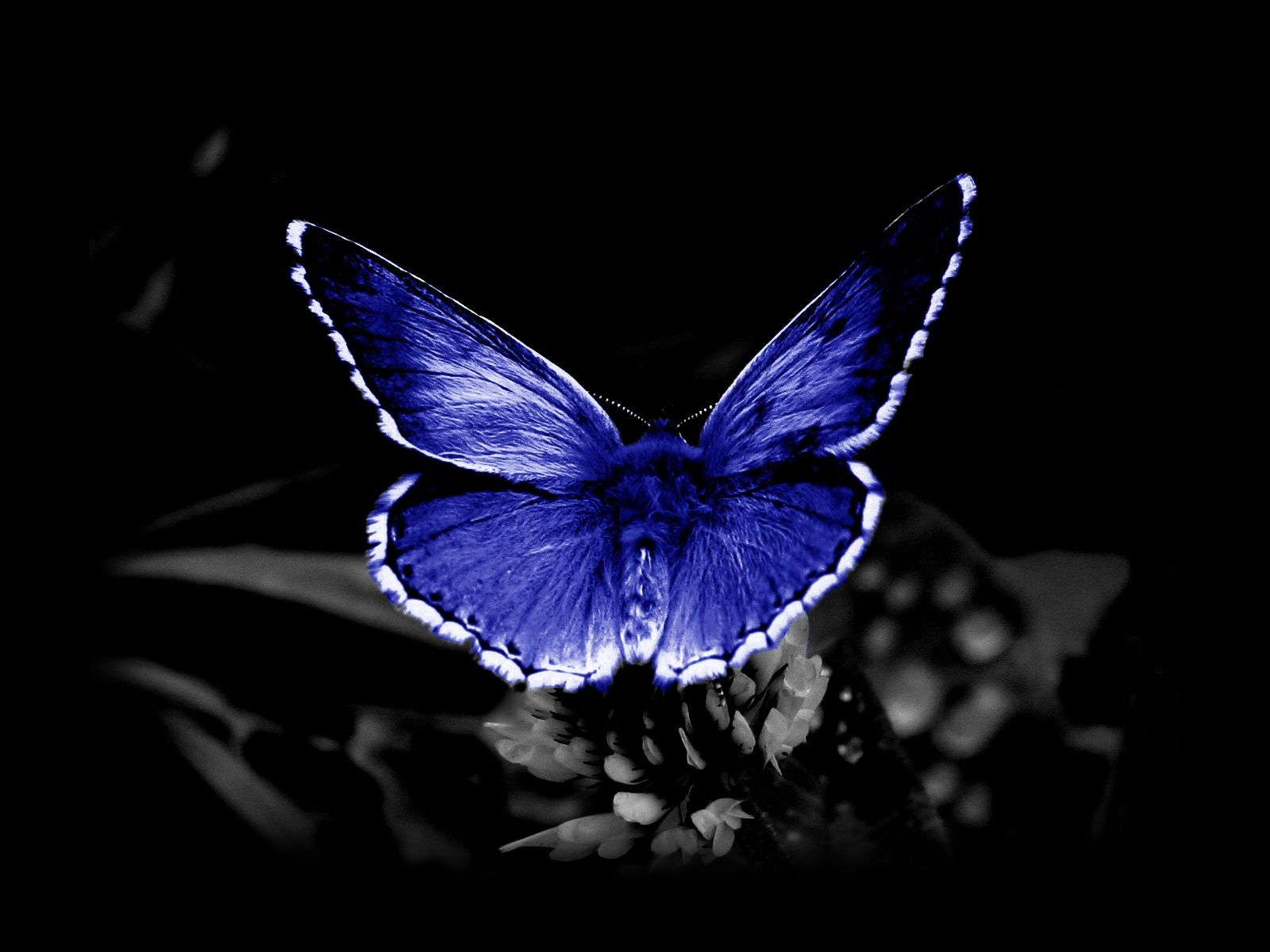1080p Hd Butterfly Wallpaper Download High Quality - High Resolution Black And White , HD Wallpaper & Backgrounds