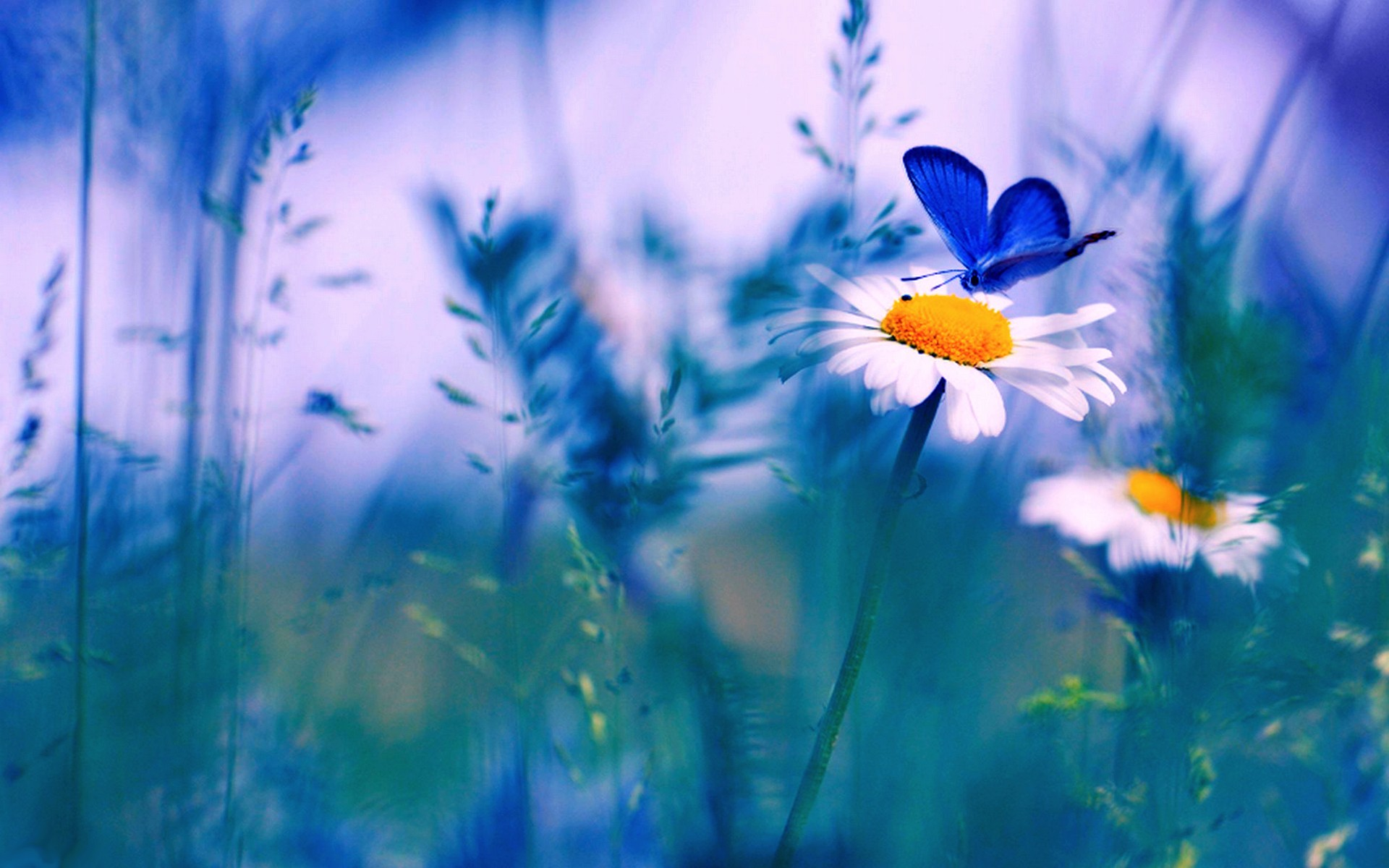 Butterfly And Spring Flowers 985024 Hd Wallpaper