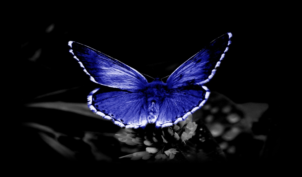 Hd Butterfly Images Download , HD Wallpaper & Backgrounds
