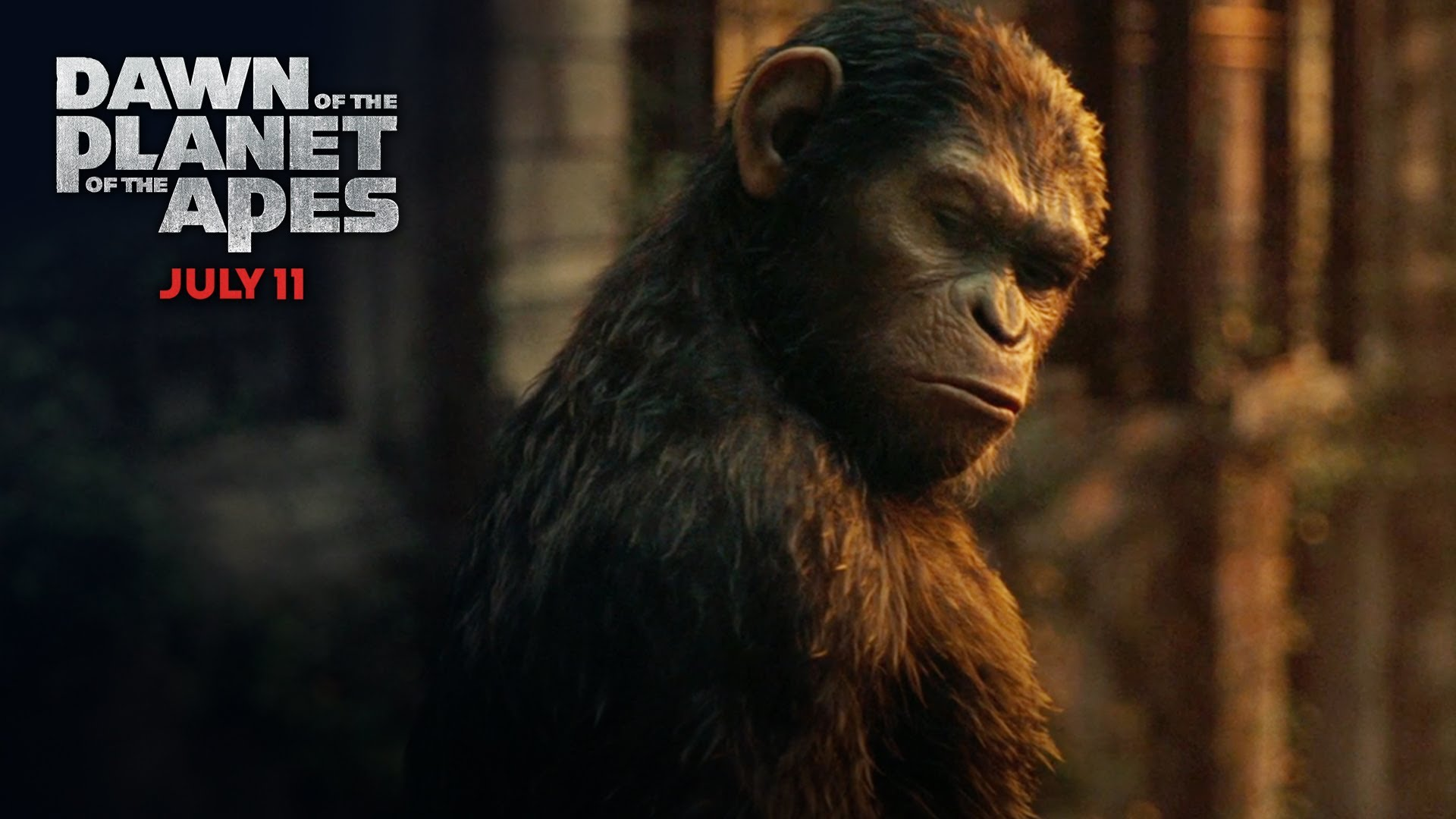 Dawn Of The Planet Of The Apes Caesar Vs Koba Wallpaper Common
