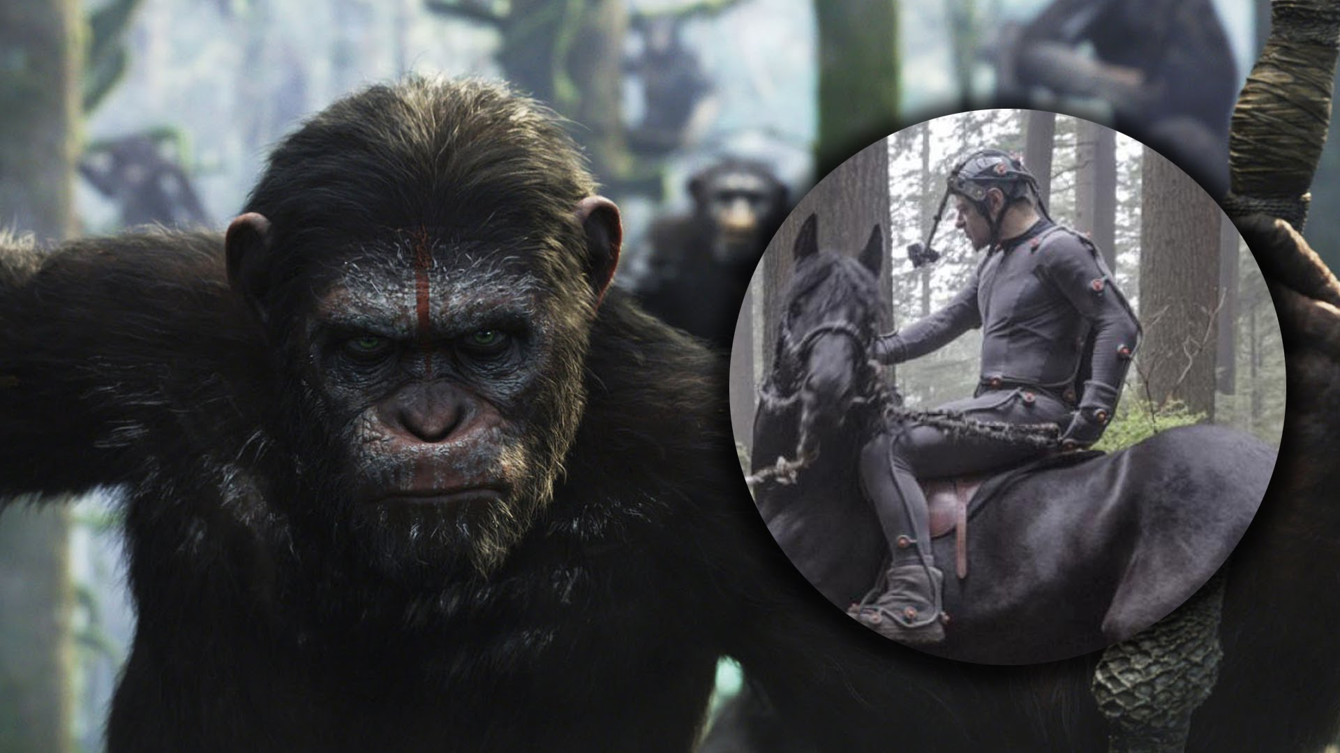 Dawn Of The Planet Of The Apes Wallpaper Dawn Of The Planet Of